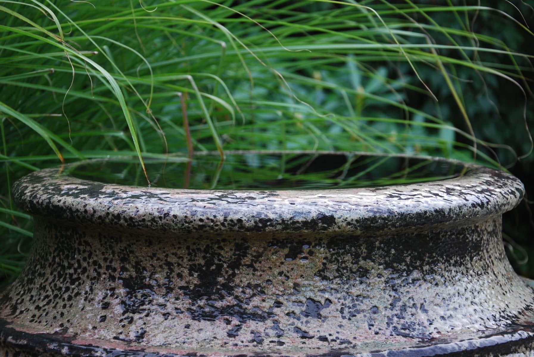 Cadabra Knossos stengodskruka som vattenurna