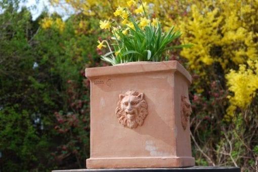 Cubo teste leone terracottakruka fyrkantig med lejon från Italien