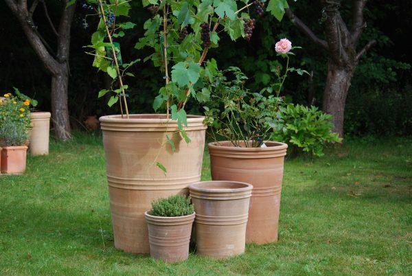 Astra stora och höga krukor från Cadabra för medelhavsträdgård
