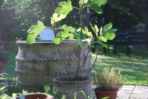 Colosseo stora frosttåliga planteringskärl för trädgården