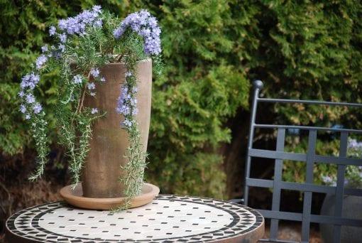 höga frosttåliga utekrukor vaso cono chocolate för trädgården och uteplatsen