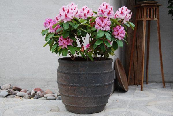 frosttåliga utekrukor colosseo fired earth stora planteringskärl inomhus och utomhus