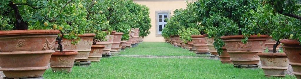 Stora antika terrakottakrukor och orangerier – Strövtåg i Renässansens Florens