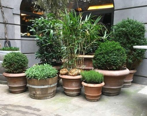 Terrakottakrukor Liscio doppio bordo frosttåliga italienska uteplatsen och trädgården