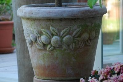 terrakottakrukor citronträd vaso limone patineras snabbt