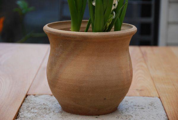 Tulipa trädgårdskrukor krukor från Kreta