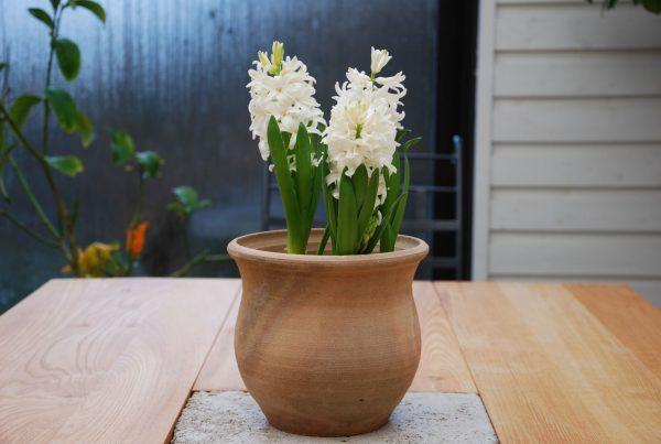 Tulip frosttåliga terrakottakrukor krukor och utomhuskrukor från Kreta