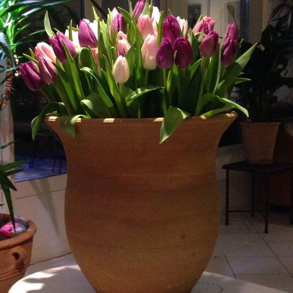 Tulipa handdrejad terrakottakruka