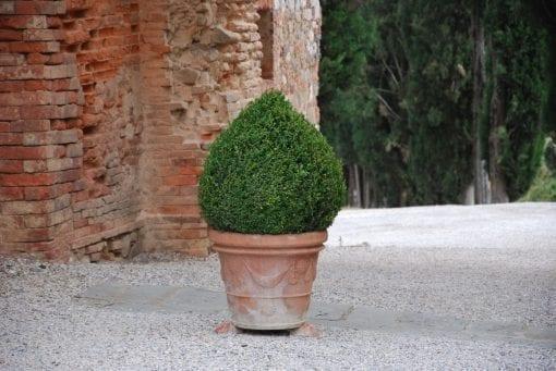 Stora Terracottakrukor Vaso Festonato från Toscana Italien för medelhavsträdgården