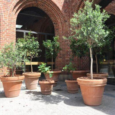 Terracottakruka vaso liscio doppio bordo italiensk frosttålig stor