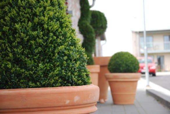 Stora Italienska krukor i terrakotta