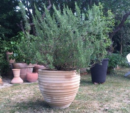 stor terrakottakruka rigatos kreta för trädgård och park2