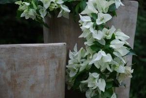 Vaso Cono Lungo Plain2 höga moderna krukor för trädgårdsdesign