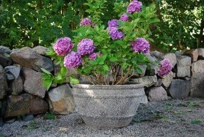 planteringskarl colosseo wide antique stora frosttaliga krukor och utekrukor