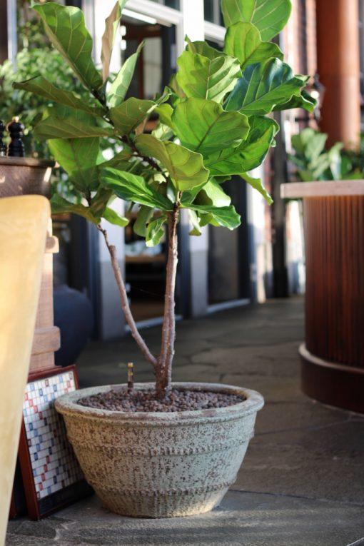 Interior design knossos stengods stort planteringskärl kruka the steam hotel fiolfikus