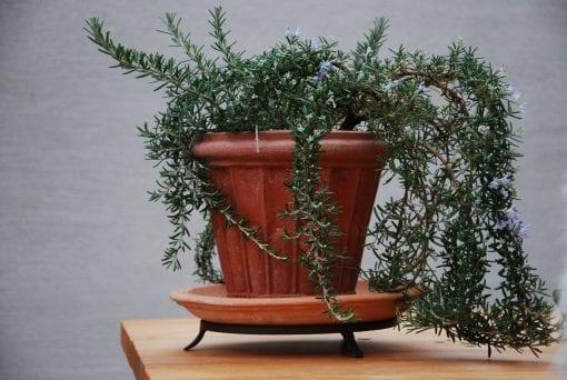 Smidda kruktassar till fat och terrakottakrukor lerkrukor utekrukor