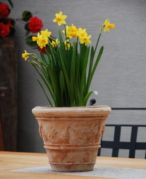 terrakotta vintage festonato piccolo snygga krukor inne och ute