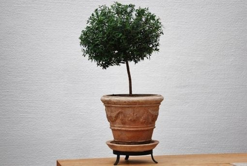 kruka med fat och tassring piccolo fesonato terrakottakruka