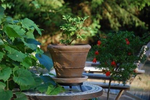 terrakottakruka liscio doppio bordo piccolo vintage snygg kruka