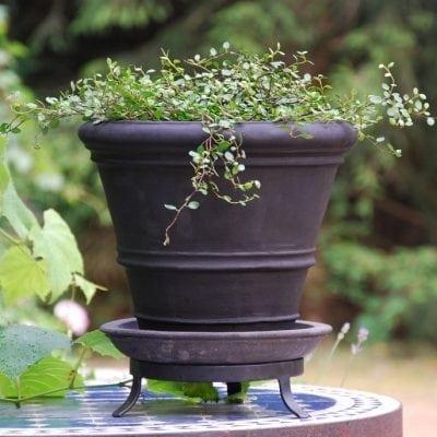 terrakottakruka liscio doppio bordo piccolo licorice svart snygg kruka