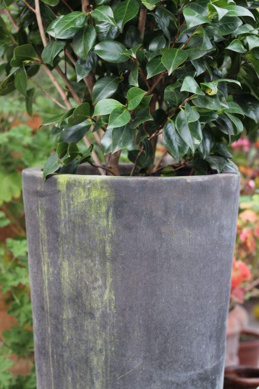 Hög kruka Cono Lungo Licorice med Kamelia - Cadabra