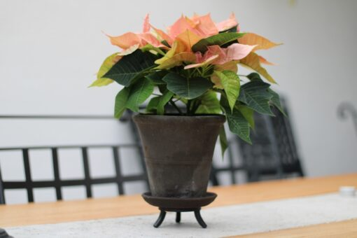 Kruka med fat Mini svart brun handdrejad terrakotta